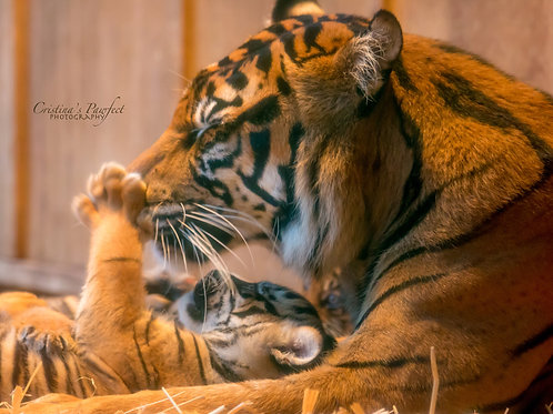 Tiger Mom Playing With Baby 8X10 Mat