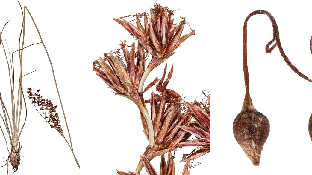 Changing plant names - a sign of advancing scientific knowledge