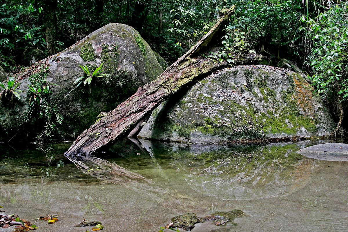 NaturesEye_0972.jpg