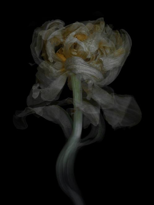 [DE]FLOWERED // Precious #12