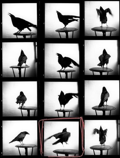 Raven Contact 1996_2010