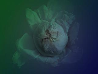 [DE]FLOWERED // litoridectomy
