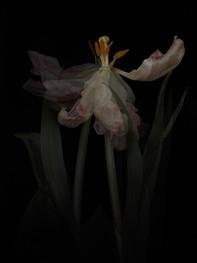 [DE]FLOWERED // Precious #10