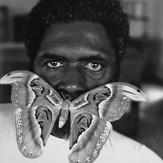Atlas Moth 1990