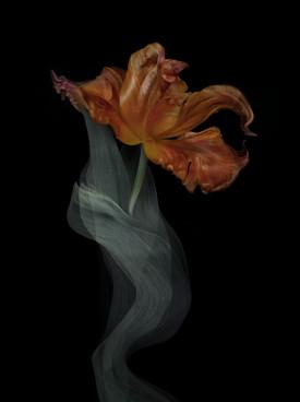[DE]FLOWERED // Precious #1