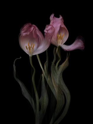 [DE]FLOWERED // Precious #4
