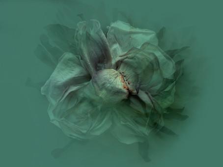[DE]FLOWERED // Complication I