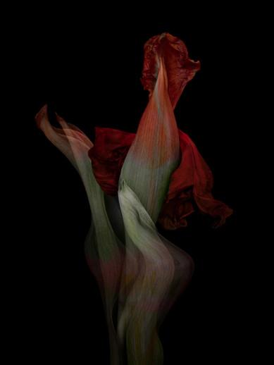 [DE]FLOWERED // Precious #8