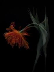 [DE]FLOWERED // Precious #2