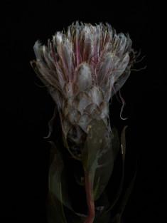 [DE]FLOWERED // Precious #11