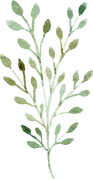 greenery-clipart-049.png