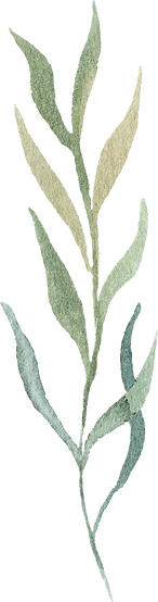 greenery-clipart-032.png
