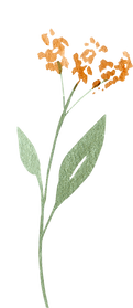 greenery-clipart-037.png