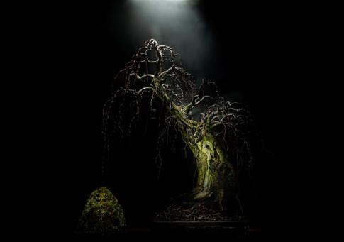 2) 20 February 2021-Johnys bonsais-Ayles