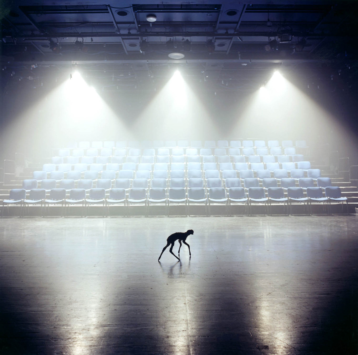 1. Animal 16.50. 2010.jpg