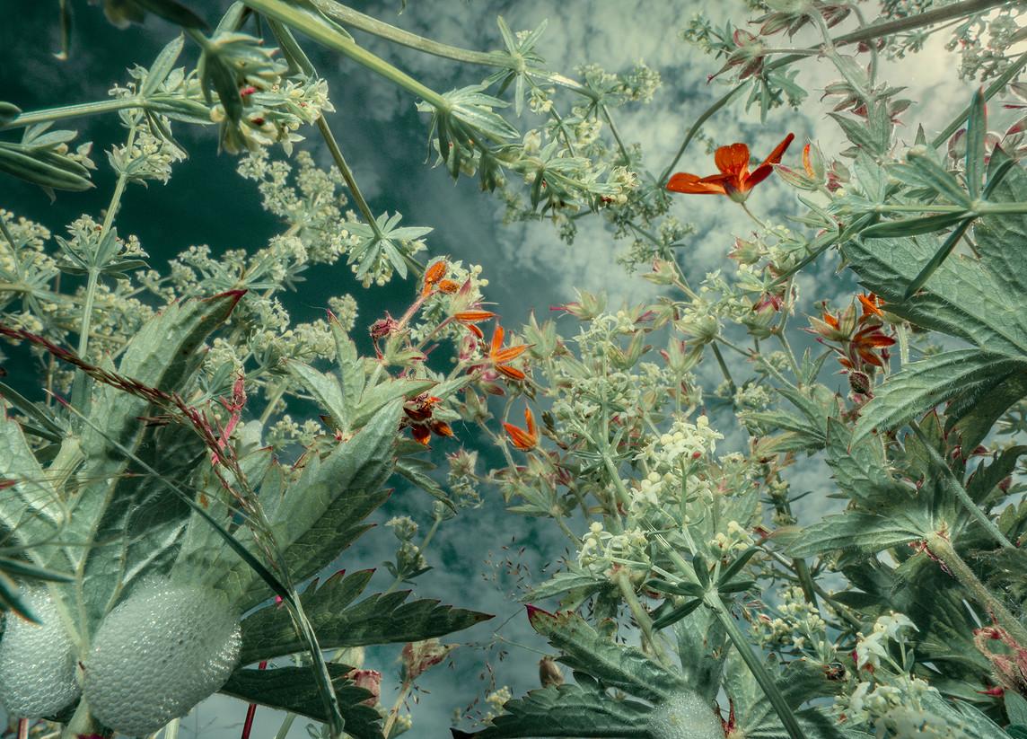 botanical_perceptions_P7100215.jpg