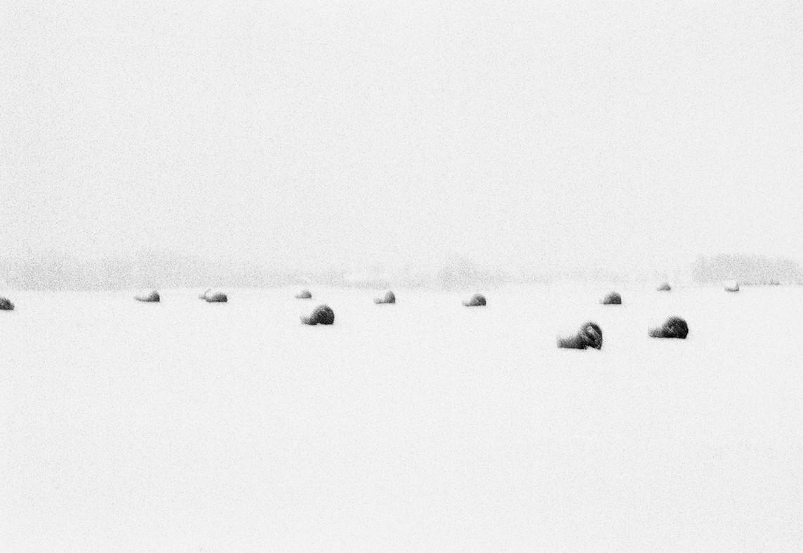 Vinter I_Winter I 2001.jpg