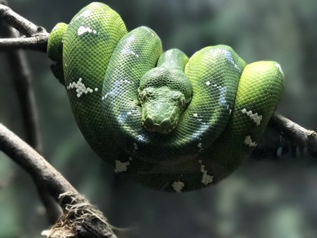 Untold Podcast–Good Snakes Flash Fiction Feature!