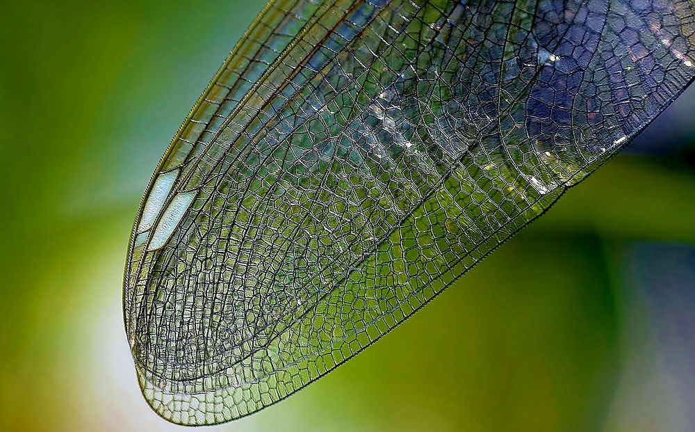 dragonfly-wing-615240_1280