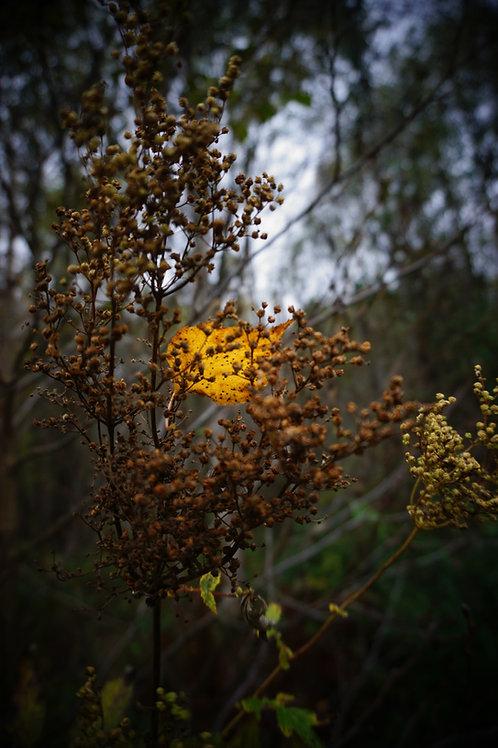 Gull i skogen
