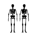 skeleton-2883761_1280_edited.png