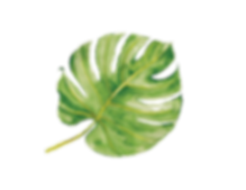 WEBSITE LEAF.png