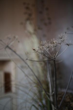 Flower Detail.jpg