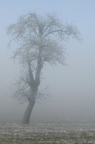 paysage_arbre_hiver.jpg