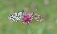 I_p_papillons-1.jpg