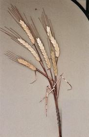 Epis de blé en cuivre et laiton de 1m. 10, fixés au mur. Pièce unique.