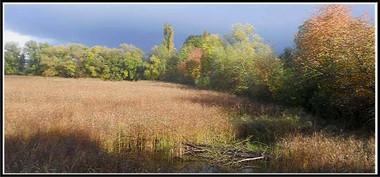couleurs_automne-1.jpg