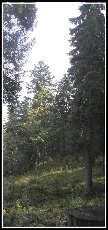W_forêt-2