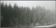 jorat_neige5.jpg