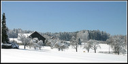 jorat_neige2.jpg