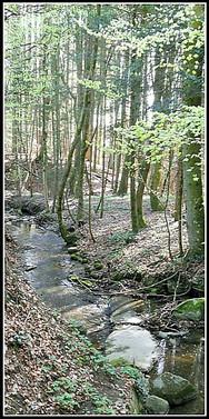 ruisseau3.jpg