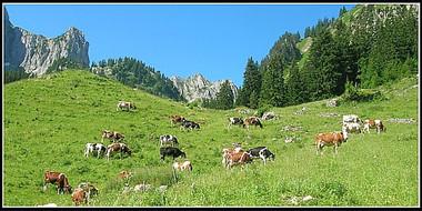 Alpes_colbase-1.jpg
