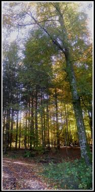 r_forêt-1.jpg