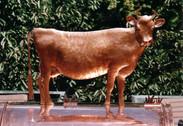 Vache en cuivre sur un chapeau de cheminée. 65 cm.