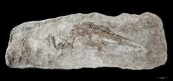 世界最古の首長竜