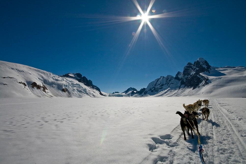 Juneau Dog Sledding and Glacier Helicopter Tour in Alaska