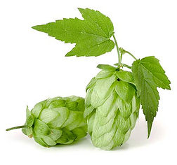 bullion-hop-cones copy.jpg