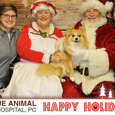 Avenue Animal Holiday Pictures