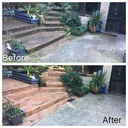 Backyard Rejuvenation