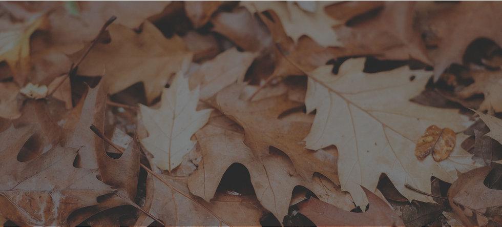 fall-festival-banner.jpg