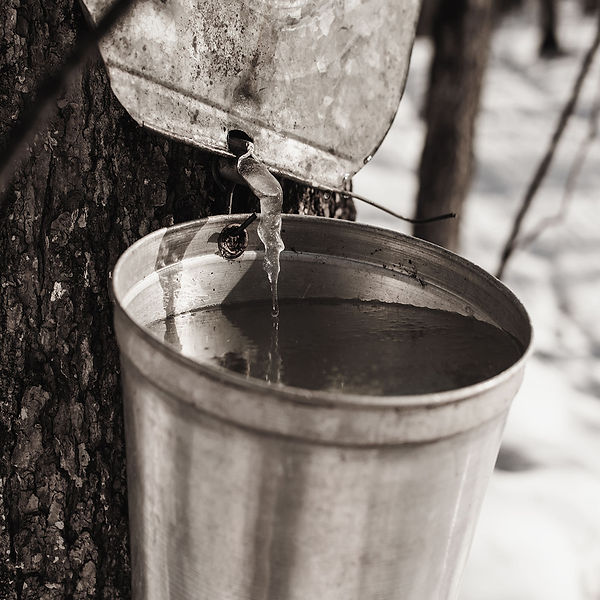 maple-our-syrup.jpg
