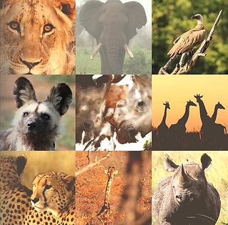 sample photos faces of extinction jennif