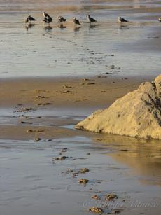 california-bird-tracks-in-sand-Crystal-C