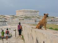 Cuba-old-fort-and-dog-Havana _JenniferVi