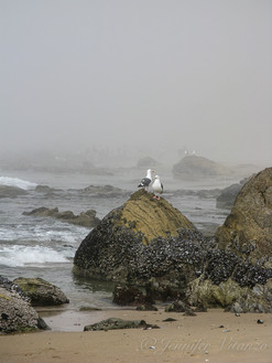 california-two-seagulls-at-shore-in-mist