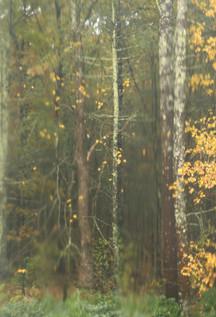 fall_view_from_the_window_Sudbury_©Jenni